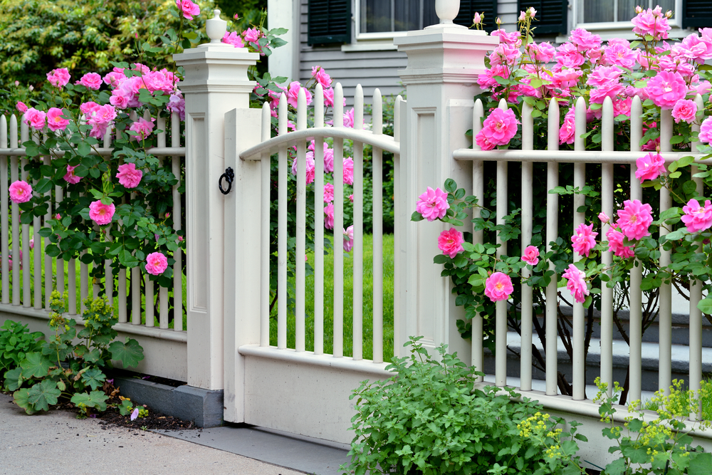 Charming-southern-fence-flowers